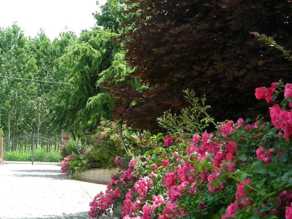 fiori romano bologna - photo#39