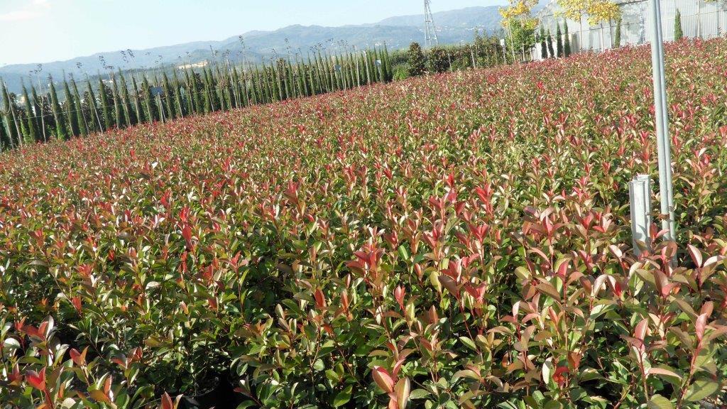 Vendita piante a bologna for Nergi piante vendita