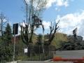 Potatura ed abbattimento piante ad alto fusto con piattaforma aerea.jpg