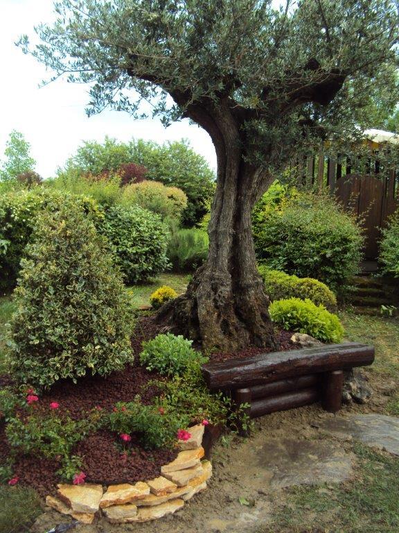Progettazione e realizzazione giardini for Aiuola con ulivo
