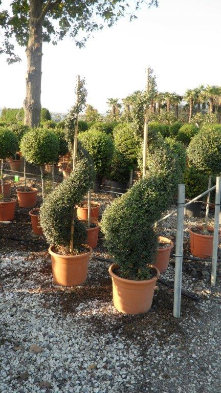 Vendita piante a bologna for Piante vendita
