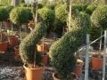 piante piazzale 008