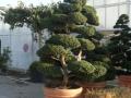 piante piazzale 012