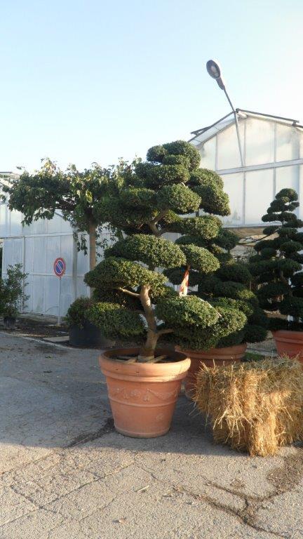 Vivaio a bologna vendita piante in vaso for Piante vendita