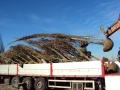 carico con escavatore tir di piante